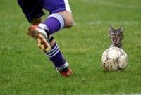 كرة القدم لعبة رائعة لكن أحيانا تحدث بعض المشاهد الغريبة. حيث التقطت عدسات المصورين بعض من هذه المشاهد، والتي سنٌتابعها في هذه الجولة المصورة.